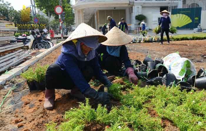 Công nhân trang trí hoa cho công viên truoc nha hat