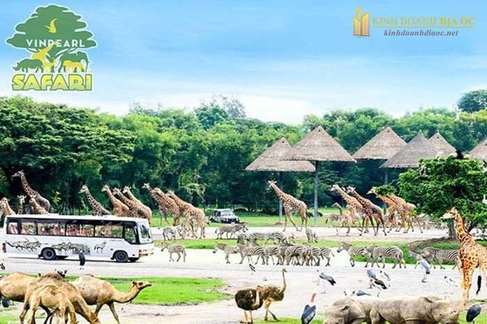 tiện ích vườn thú safari vinpearl cần giờ
