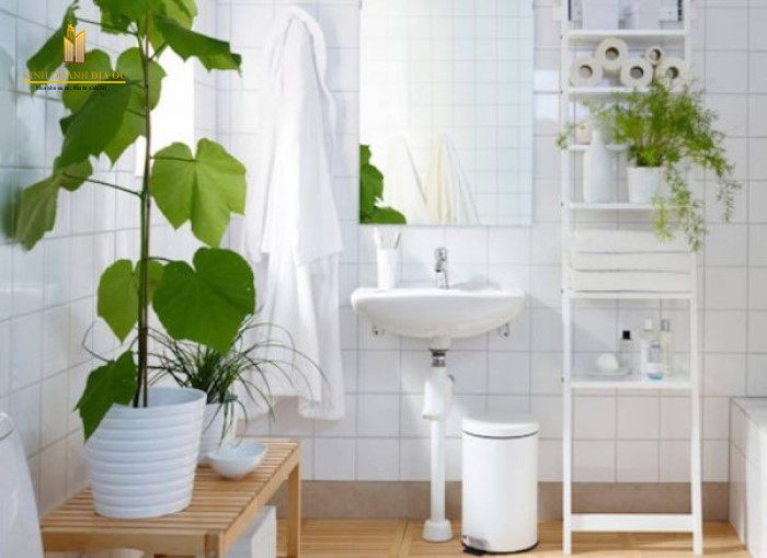 đặt cây cảnh trong phòng tắm