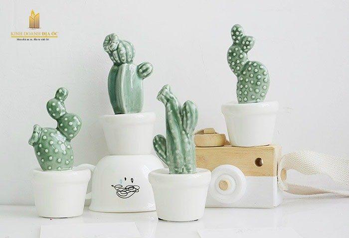 cây xương rồng không nên trồng trong nhà