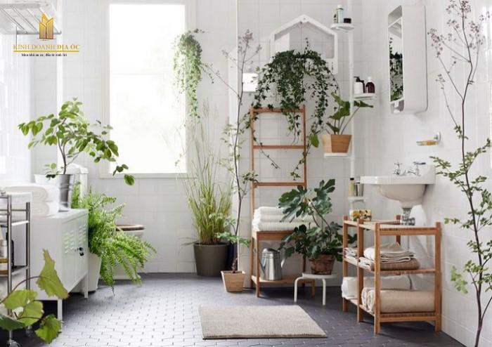 những loại cây không nên trồng trong nhà
